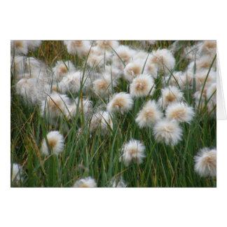 Grama de algodão (russeolum do Eriophorum) Cartão Comemorativo