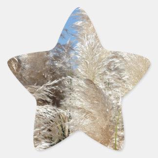 Grama de Pampas com um céu azul ensolarado Adesito Estrela