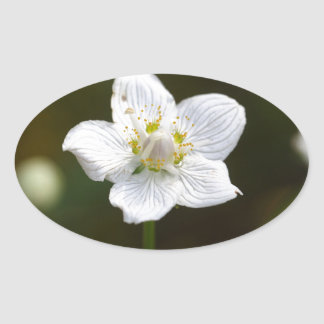 Grama do pântano de Parnassus (palustris do Adesivo Oval