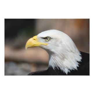 Grande águia americana arte de fotos