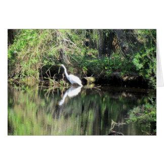 Grande cartão branco do Egret