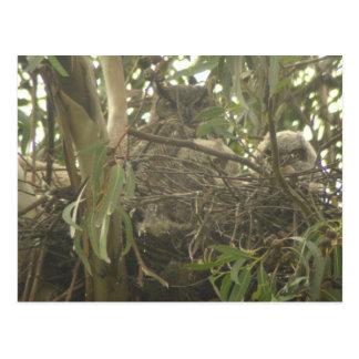 Grande cartão do ninho da coruja Horned