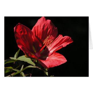 Grande cartão vermelho do hibiscus (coccineus do