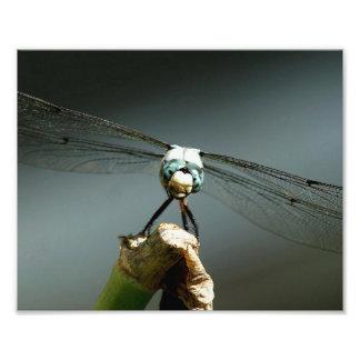 Grande cópia azul da foto do Skimmer Impressão De Foto