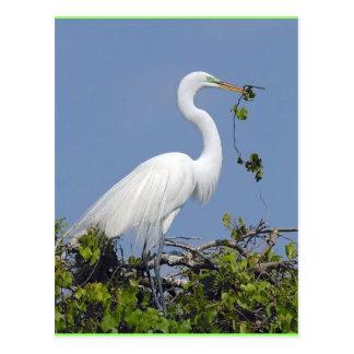Grande Egret, cartão de Florida