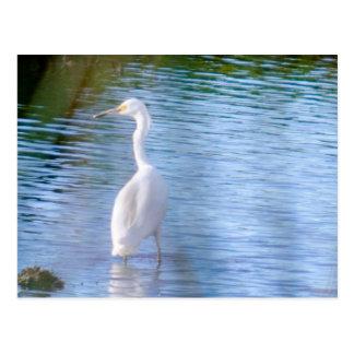 Grande egret nos pantanais cartão postal
