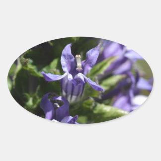 Grande Lobelia azul (siphilitica do Lobelia) Adesivo Oval