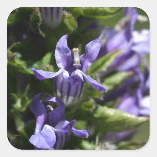 Grande Lobelia azul (siphilitica do Lobelia) Adesivo Quadrado