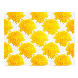 Grande papel de parede amarelo do crisântemo cartão postal