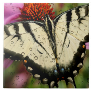"Grandes (6"" X 6"") azulejo/borboleta cerâmicos da Azulejo Quadrado Grande"