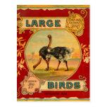 Grandes pássaros cartoes postais