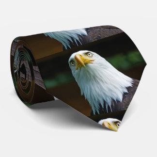 Gravata Cabeça americana da águia americana