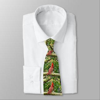 Gravata Cardeal em um laço dos homens do membro