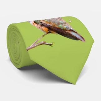 Gravata Colibri Rufous que senta-se no Lilac de Califórnia