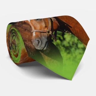 Gravata Dois cavalos bonitos da castanha no Sun