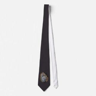 Gravata Esquilo de cinzas orientais - carolinensis do