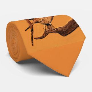 Gravata faisão do Anel-pescoço (South Dakota)