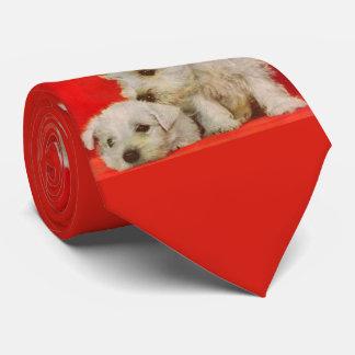 Gravata filhotes de cachorro brancos adoráveis do terrier
