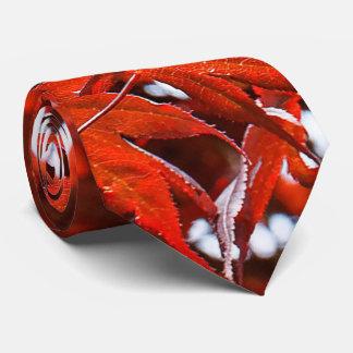 Gravata Folhas de bordo vermelhas japonesas