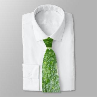 Gravata Foto molhada, verde, nova, listrada da abóbora