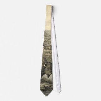Gravata Rebanho 1911 do búfalo
