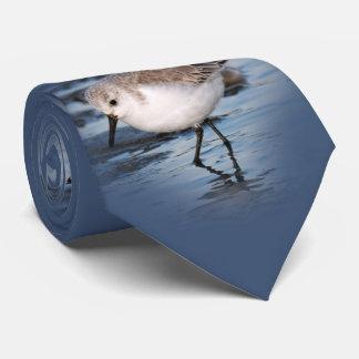 Gravata Sanderling pequeno bonito na praia
