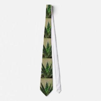 """Gravata Succulent de Variegata do """"jacaré"""" do aloés"""