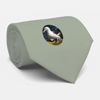 Gravata Suporte do albatroz no auge do penhasco do mar