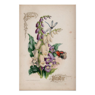 Gravuras botânicas, outubro posters
