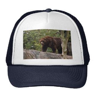 grizzly-bear-013 boné