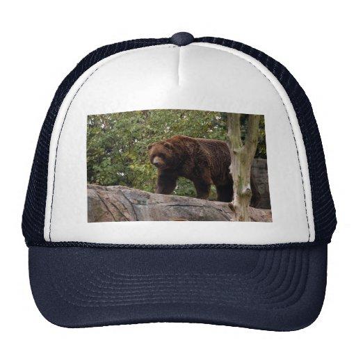 grizzly-bear-013 bonés