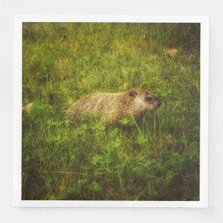 Groundhog em guardanapo de um campo