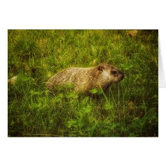 Groundhog em um cartão do campo