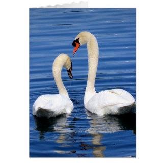 Grupo de cartão do notecard do casal da cisne