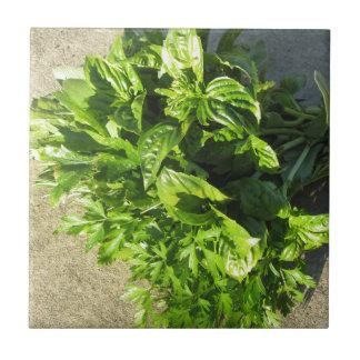 Grupo de ervas frescas