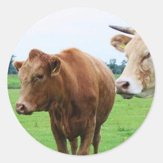Grupo de vacas adesivos em formato redondos