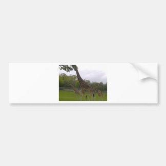 Grupo do girafa adesivo para carro