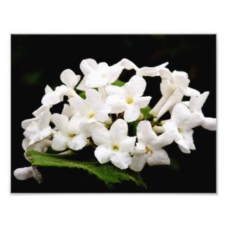 Grupos das flores brancas impressão de foto