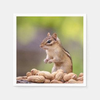 Guardanapo De Papel Chipmunk com amendoins