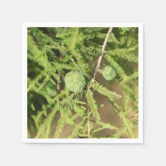 Guardanapo De Papel Cone da semente de Cypress calvo