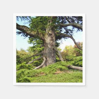 Guardanapo de papel da árvore de Cedro--Líbano