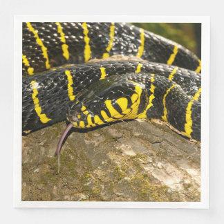 Guardanapo De Papel De Jantar Dendrophila de Boiga ou cobra dos manguezais