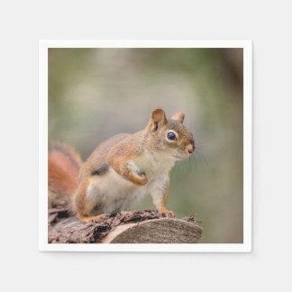 Guardanapo De Papel Esquilo vermelho