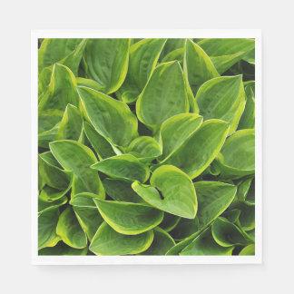 Guardanapo De Papel Folhas verdes da planta do hosta