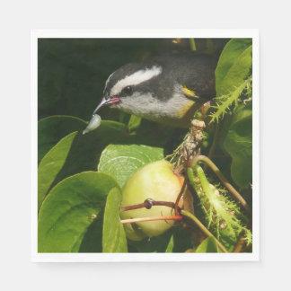 Guardanapo De Papel Fotografia tropical da natureza comer do pássaro
