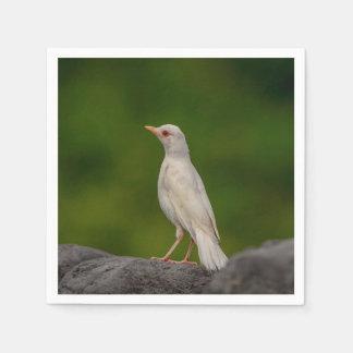 Guardanapo De Papel Pisco de peito vermelho do albino no ponto da