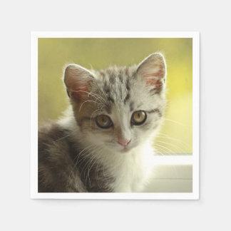Guardanapo De Papel Retrato bonito do gatinho