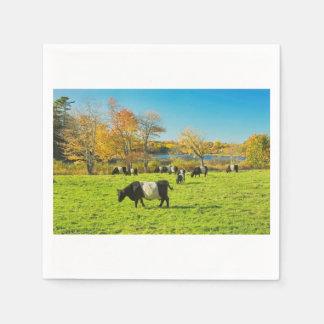 Guardanapo De Papel Vacas cercadas de Galloway que pastam na grama na