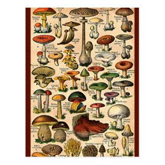 Guia do cogumelo do vintage cartões postais