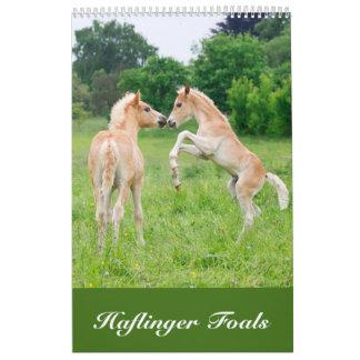 Haflinger Foals 2017 Calendário